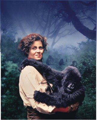 nas-montanhas-dos-gorilas02